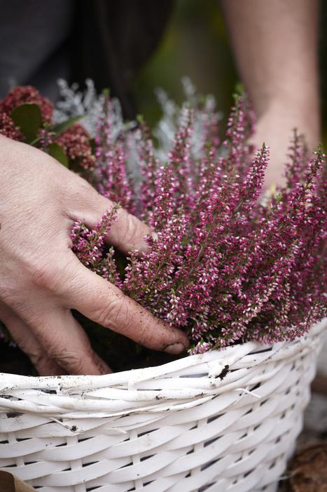 10 razones para comprar plantas en la floristeria | Hablando con flores | artesaniaflorae | Scoop.it