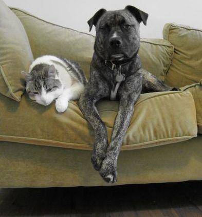5 Benefits of Having A House Pet   Animal Bliss   Animal Welfare   Scoop.it