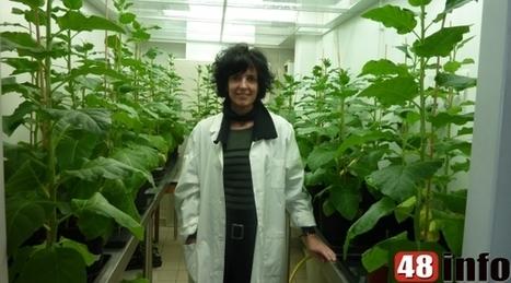 Une universitaire lozérienne a fait des découvertes  qui pourraient transformer  l'agriculture de demain - 48info | agriculture | Scoop.it