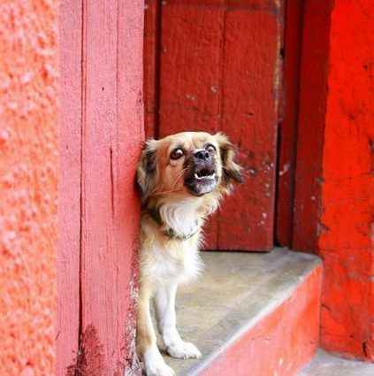 7 Common Bad Dog Habits You Need to Break Right Now | Animal Bliss | Animal Welfare | Scoop.it