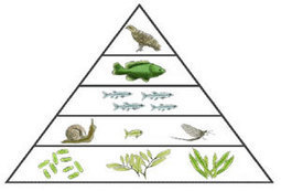 Life Science | Session 7 | Ecosystems Unit | Scoop.it