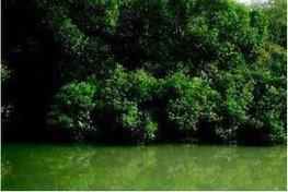 Villagers struggle to save land as islands shrink in Sundarban - The Economic Times | Sustain Our Earth | Scoop.it