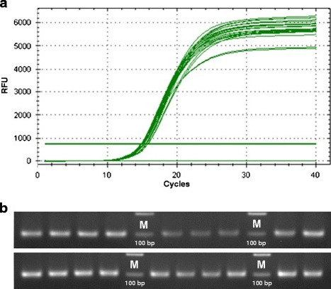 Development of Real-Time PCR for in wood-detection of Ceratocystis platani, the agent of canker stain of Platanus spp. | PCR PRIMERS FOR THE IDENTIFICATION OF PHYTOPATHOGENIC FUNGI | Scoop.it