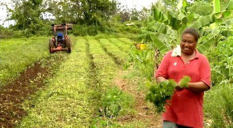 Les Samoa, un petit archipel bientôt 100% biologique | Pour une agriculture et une alimentation respectueuses des hommes et de l'environnement | Scoop.it