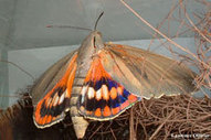 Palmiers : La recherche se mobilise pour les sauver   EntomoNews   Scoop.it