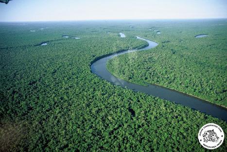 No a la tala indiscriminada en la Amazonía. - Taringa!   LA DESFORESTACION DE ARBOLES   Scoop.it