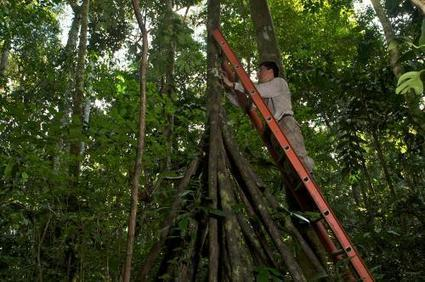 Direct evidence that drought-weakened Amazonian forests 'inhale less carbon' | GarryRogers Biosphere News | Scoop.it