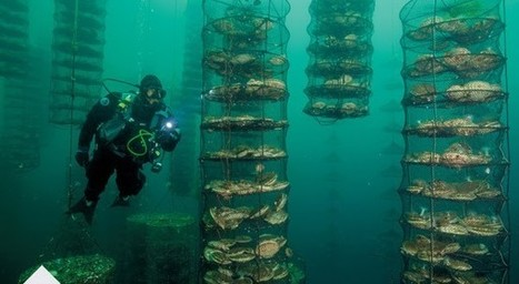 Fisherman invents 3D underwater farms that protect shores and replenish the ocean | OMG - Ocean Marine Guardians | Scoop.it