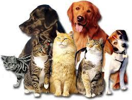 cats & dogs!