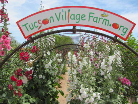 See dazzling blooms at Village Farm | Arizona Daily Star | CALS in the News | Scoop.it