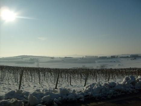 Territori vocati: il Monferrato Gavi – parte prima | Gavi e Dintorni: vino, cibo, territorio, eventi e cultura | Scoop.it