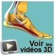 Anatomy In 3D | Zientziak | Scoop.it