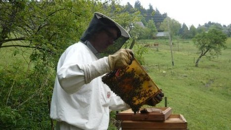 Ariège et Pyrénées-orientales : les apiculteurs cherchent à comprendre l'hécatombe de 2013 - France 3 Midi-Pyrénées | Filière apicole française | Scoop.it
