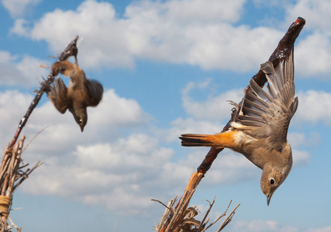 Millions of Migrating Songbirds Massacred in the Mediterranean | safarious | Scoop.it