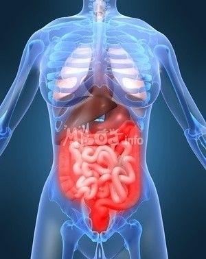 L'épidémie de gastroentérite démarre | Roshirached | Scoop.it