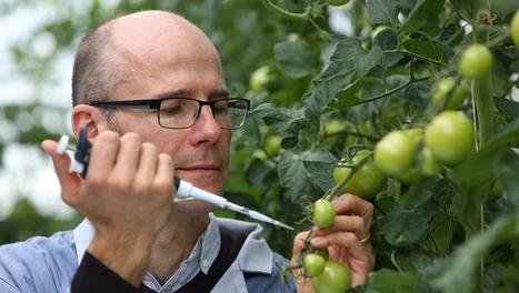 BBSRC mention: Breakthrough technology could help prevent future crop failures | BIOSCIENCE NEWS | Scoop.it