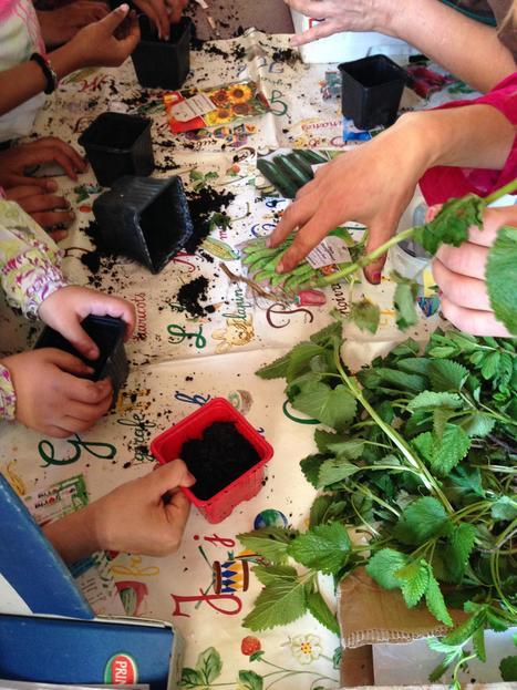 Ateliers de jardinage à Sainte Foy la Grande | Coeur de Bastide de Ste Foy la Grande | Scoop.it