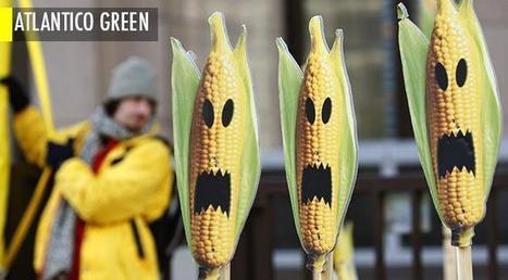 La nouvelle étude qui établit que les OGM pourraient effectivement représenter un danger | Autres Vérités | Scoop.it