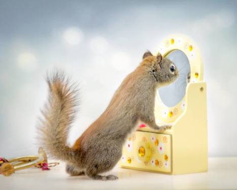 Secret Life Of Squirrels | Bedford, NS | Scoop.it