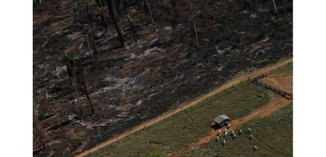Inutile de déboiser pour l'agriculture, dit la FAO - l'Obs | Actualités écologie | Scoop.it