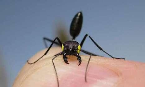 On a constaté que les fourmis du désert avaient un double système de navigation / Desert ants found to have dual navigation systems | EntomoNews | Scoop.it