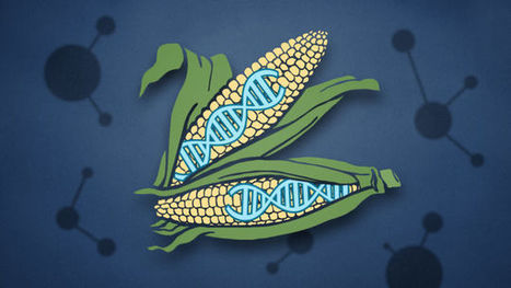 The Biggest Concerns About GMO Food Aren't Really About GMOs | GM Foods | Scoop.it
