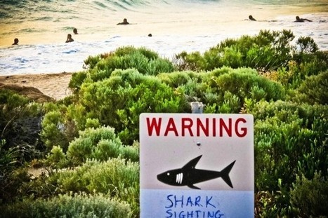 Australian Hysteria Results In Deadly Shark Slaughter | Animals R Us | Scoop.it