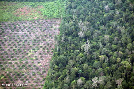 Indonesia to squander fuel savings on biofuel subsidies that may drive deforestation, say groups | Orangutan Land Trust | Scoop.it