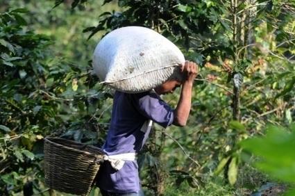 Tribune libre. Pour nourrir l'humanité en 2050, l'agriculture durable doit devenir la norme | Questions de développement ... | Scoop.it