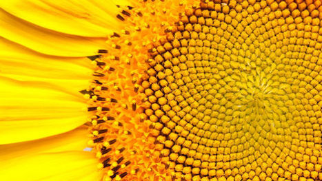 15 Uncanny Examples of the Golden Ratio in Nature | Math, technology and learning | Scoop.it