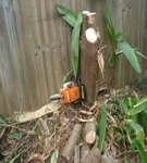 All Access Stump grinding Brisbane, How to remove a stump, Pricing guide for stump grinding,cheap low cost stump grinding | Stump Grinding Guide in Dallas Ga | Scoop.it