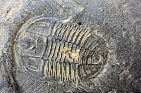 Paleontologists Discover Treasure Trove of Fossils at New Burgess Shale Site   I Fucking Love Science   Ancient Civilization   Scoop.it