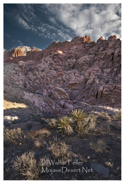 Mojave Desert: Hottest Place on Earth | Jake GEO Portfolio (Spring '14) | Scoop.it