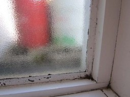 Stop condensation on windows, cure damp walls, and treat Black Mould | The DIY Doctor's Blog | Home Improvement and DIY | Scoop.it