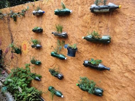 Sabor do Fazenda Urban Farming and Permaculture Education ... | Growing Food | Scoop.it