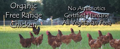 No-flavour organic free range chicken is good for health | Top Line Foods | Scoop.it