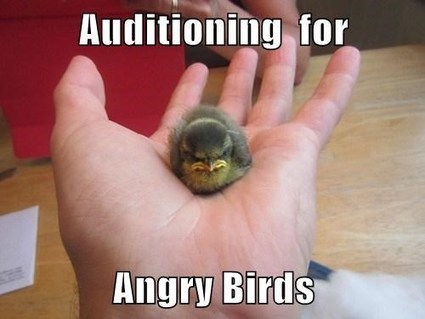 Real Angry Bird | Facts Village | Funny Pics Online | Scoop.it