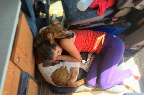 Cagnolina fa da scudo con il suo corpo per proteggere i suoi piccoli | My Pet's Hero | Scoop.it