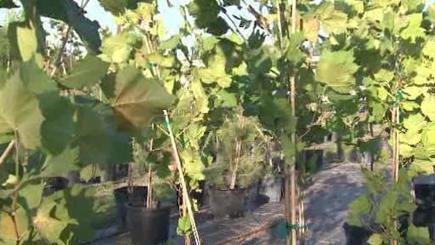 Centerpoint Energy offers free trees to customers   Energy Saving Trees   Scoop.it