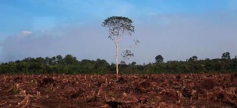 What's Driving Deforestation? | Epicurist: In Victus Veritas | Scoop.it
