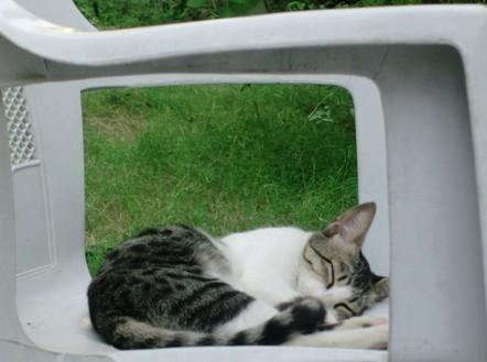 sleeping cat wallpaper | Long HD Wallpapers for PC Background | Excellent Pent Coat For Men 2012 | Scoop.it