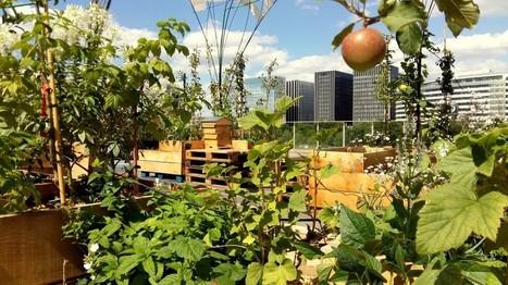 1000arbrespourleclimat | Projet Vergers Urbains | Agriculture citadine | Scoop.it