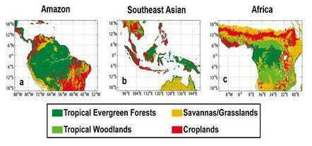 Water forms common thread in diverse rainforest ecosystems | Sustain Our Earth | Scoop.it
