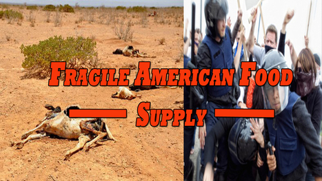 Fragile American Food Supply: Mad Cow, E. Coli, And Coming Riots | News | Scoop.it
