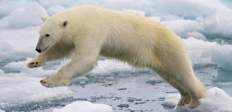VIDÉO. Ours blancs : plongée en Arctique à 360°   Biodiversité   Scoop.it