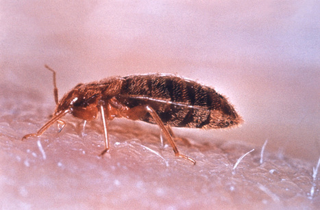 How to Get Rid of Bed Bugs Yourself   Beauty Treatments   Scoop.it