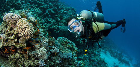 How to Become an Environmentally Safe Diver - DIVE.in | #OrcaAvengers | Scoop.it