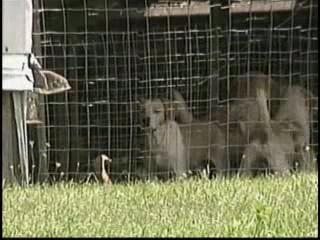 U.S. Humane Society postpones Wythe County visit | Nature Animals humankind | Scoop.it