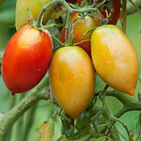 Tomato Trilogy | Garden Libraries | Scoop.it