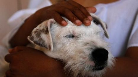 Therapy Dogs Really Do Help Cancer Patients | animals and prosocial capacities | Scoop.it